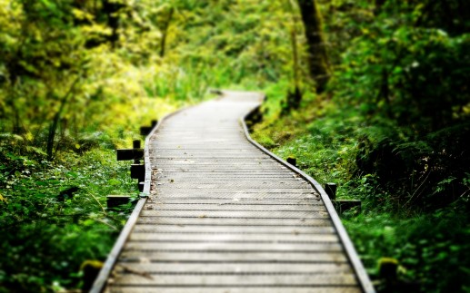 trail_path_sidewalk_walkway_macro_wood_trees_forest_woods_1920x1200